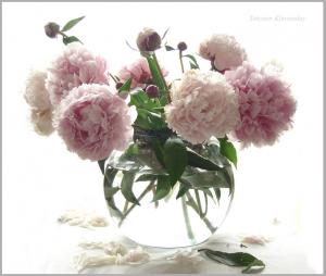 post-40271-1298401408_thumb.jpg