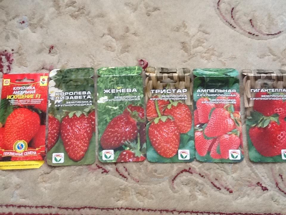 Земляника и клубника - Семена почтой купить в интернет магазине