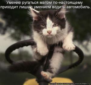 post-10969-1261143995_thumb.jpg