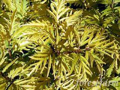 sutherland gold
